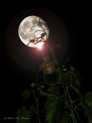 cropped-luna-vite.jpg